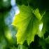 تحقیق و پژوهش-مورفولوژی خاک و برگ و ریشه-در 90 صفحه-docx